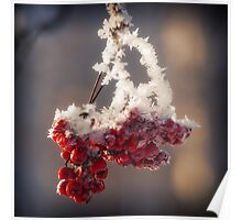 Berries in Ice Poster
