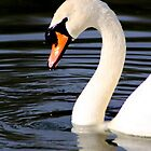 Swan Lake by jennimarshall