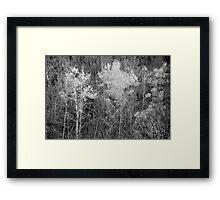 Foliage Keene Valley, NY Framed Print