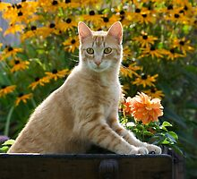 Red tabby cat watching attentively by Katho Menden