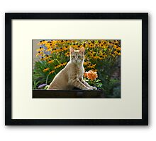 Red tabby cat watching attentively Framed Print