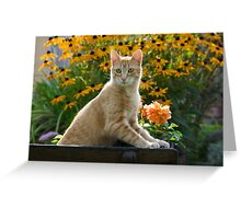 Red tabby cat watching attentively Greeting Card
