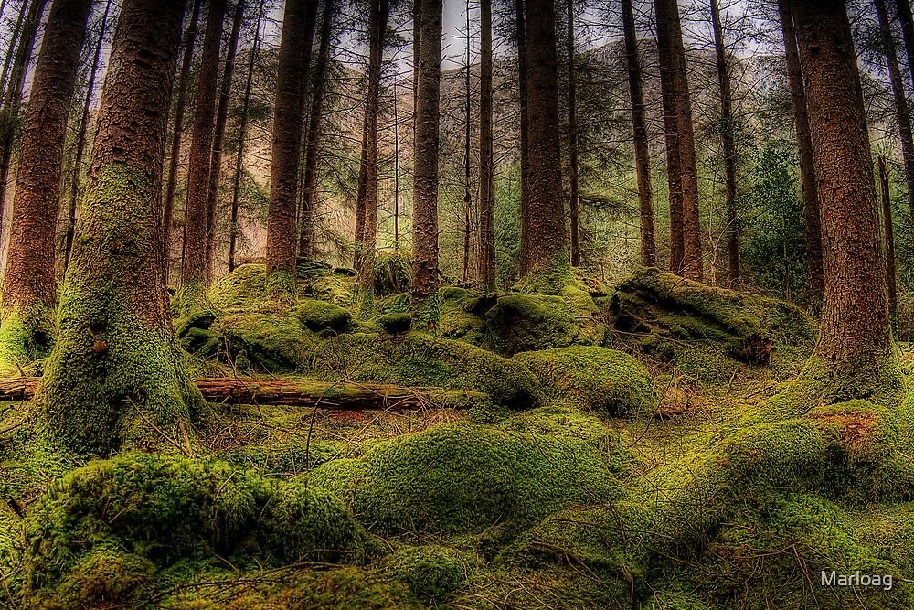 Gougane Barra Woods by Marloag