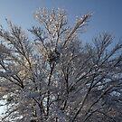 Mistletoe / Mistlesnow by ericb