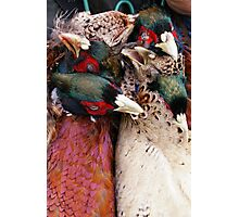 Pheasant shoot Photographic Print