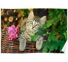 Cutie young kitten on a wicker basket  Poster