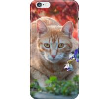 Red tabby cat amidst bright flowers iPhone Case/Skin