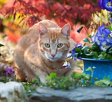 Red tabby cat amidst bright flowers by Katho Menden