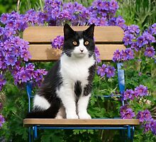 Tuxedo cat sitting on a garden chair by Katho Menden