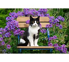 Tuxedo cat sitting on a garden chair Photographic Print
