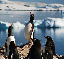 Penguins Antartica by SteveJSharp
