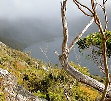 Dove Lake from Hanson's Track, Tasmania, Australia. by kaysharp