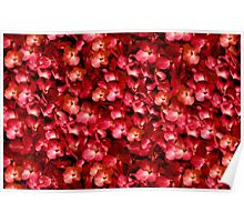 Warm Floral Collage Print Poster
