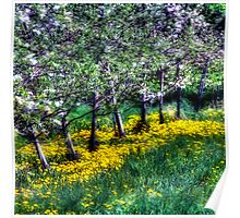 Apple Trees and Dandelions Poster