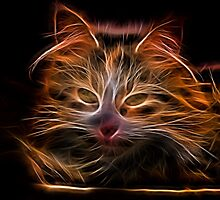 Electric Glowing Cat by Russell102