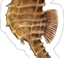 Northern Seahorse (Hippocampus hudsonius)  Sticker