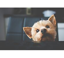 Cute funny Doggie Photographic Print
