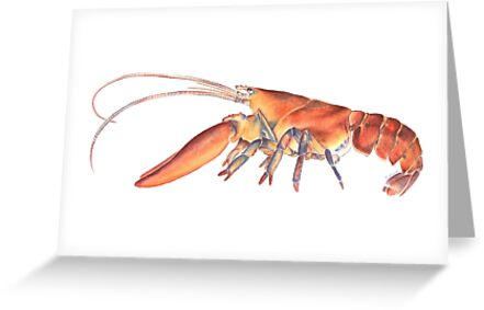 Northern Lobster (Homarus americanus) by Tamara Clark