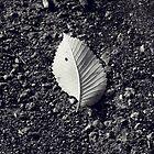 Fallen by Ashlee Lauren