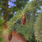 2 little pinecones sittin' in a tree by Debbie Roelle