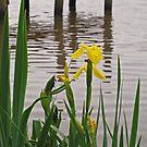 Newport Wildflower by Jack Ryan