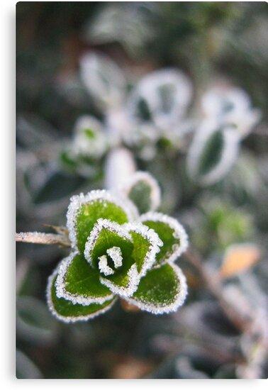 Frosty by Jeanne Horak-Druiff