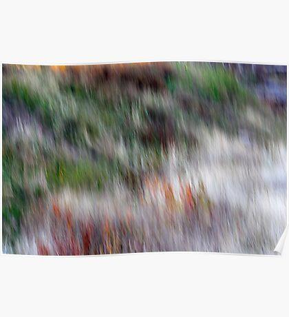 Autumn Grasses Poster