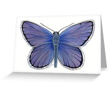 Karner Blue Butterfly Greeting Card
