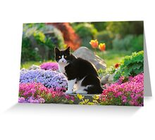Garden Cat Greeting Card