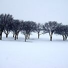 Cold Little Trees . . . by PattyB46