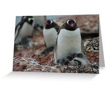 Mother & Chicks Greeting Card