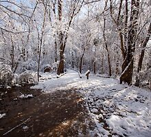 Winter Walkway by Jay Gross