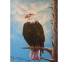 Vigilant Eagle Photographic Print
