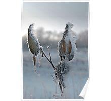 Milkweed Ice Poster