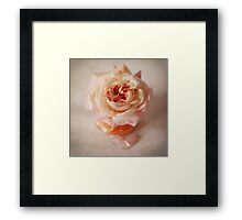 Shropshire Lad rose Framed Print