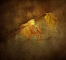 The Last Leaves Of Fall by CarolM