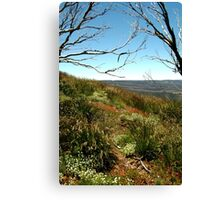 Grasses of Mt Blue Rag Canvas Print