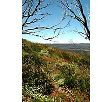 Grasses of Mt Blue Rag Photographic Print