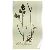 Plantarum Indigenarum et Exoticarum - Lukas Hochenleitter und Kompagnie 1788 - 200 Poster