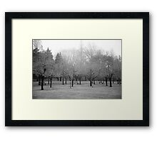 Foggy Day. B&W photo of naked winter trees. Framed Print