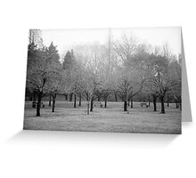 Foggy Day. B&W photo of naked winter trees. Greeting Card