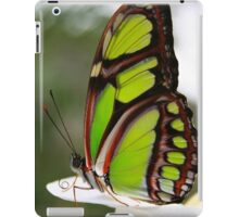 Siproeta stelenes - Malachite Butterfly iPad Case/Skin