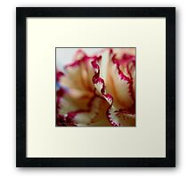 Anatomy Of A Flower IV Framed Print