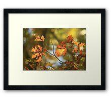 Color Harmony Framed Print