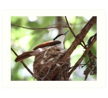 Nesting Bird - Northern Territory Art Print