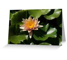 Exotic Colors - A Soft Coral Waterlily Greeting Card