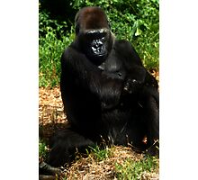 ape amble Photographic Print