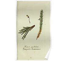 Plantarum Indigenarum et Exoticarum - Lukas Hochenleitter und Kompagnie 1788 - 135 Poster
