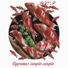 Cyprinus carpio carpio ; Japanese Koi. All profits to the RSPCA by Alex Gardiner