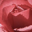 Pink by Lawrie McConnell
